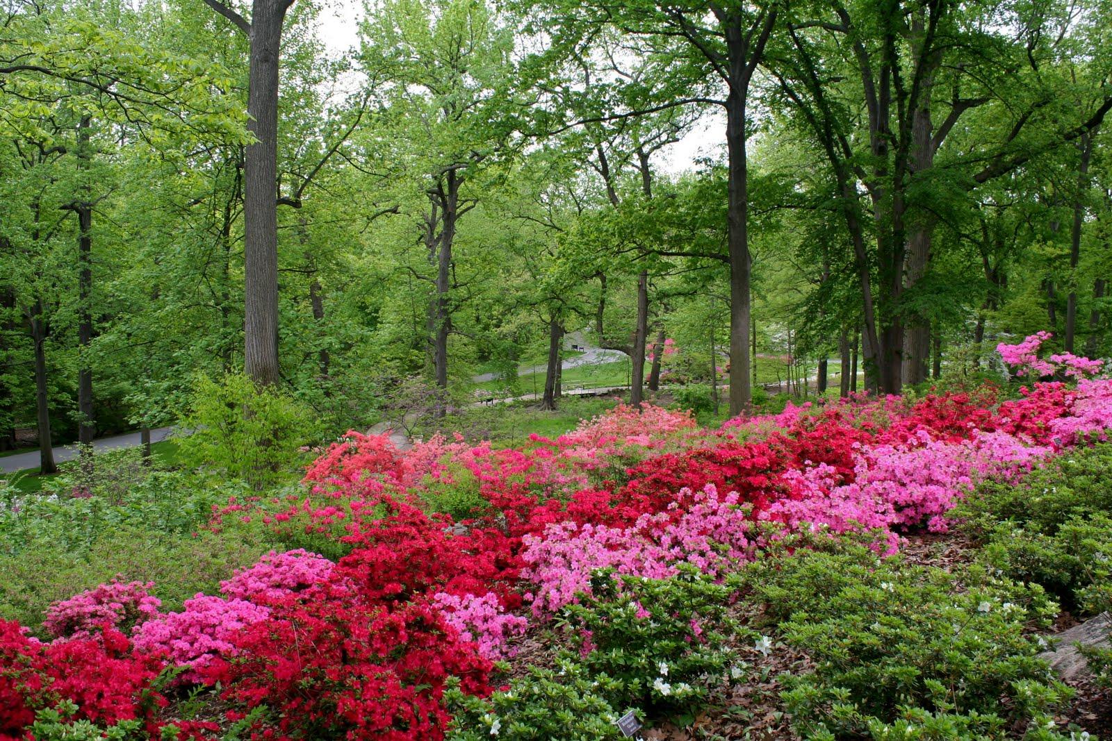Jardín de Azaleas