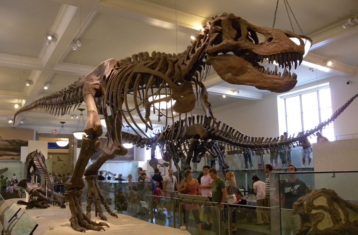 Museo Historia Natural New York