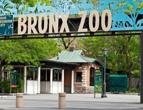 NUEVA YORK EN UN DIA: BRONX